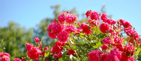 acis-flowerbed-banner-1
