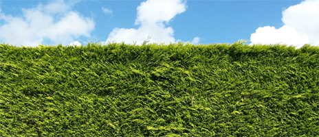 acis-hedge-cutting-banner-1