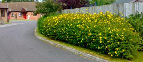 acis-shrub-banner-1