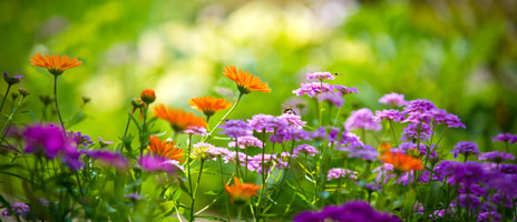 purple-and-orange-flowers-464x200