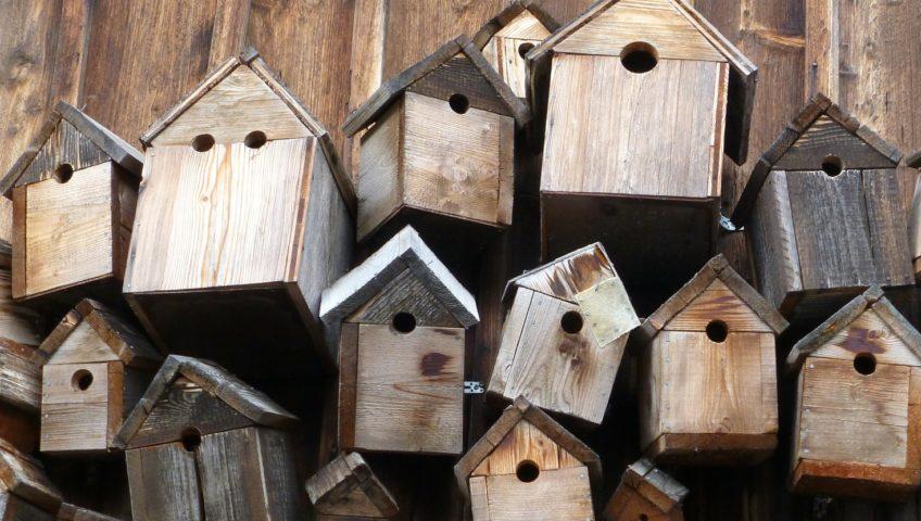 Bird boxes