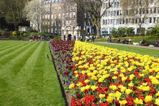Flowers In VEG
