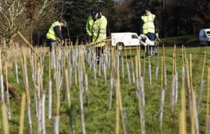Whip planting contributing to carbon offset programme